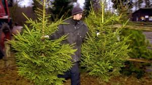 Weihnachtsbäume, Weihnachtsbaum - welcher ist richtig