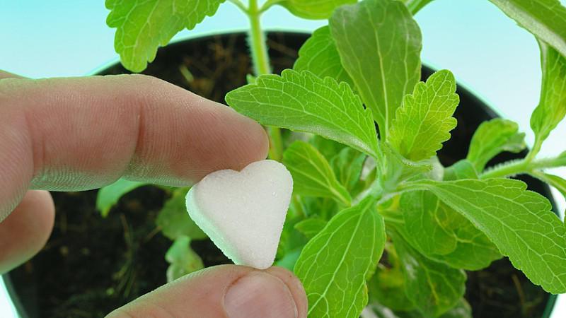 Stevia bei Stiftung Warentest