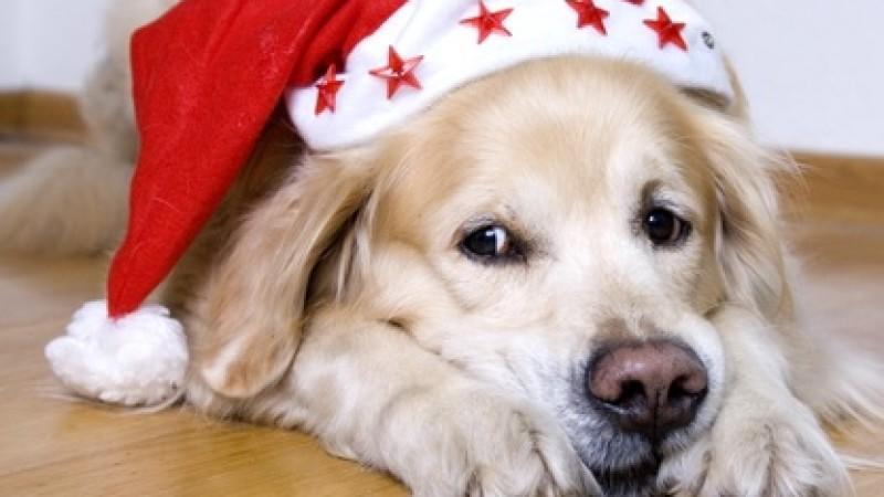 Tiere sollten nicht zu Weihnachten verschenkt werden, fordert der Tierschutzbund.