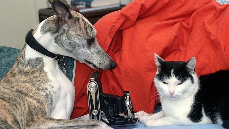 Dürfen Vermieter Hunde und Katzen in Mietwohnungen verbieten?