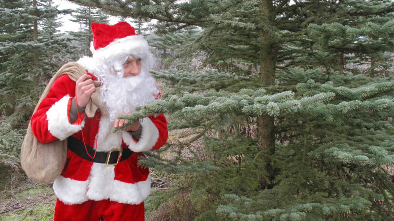 Frische Weihnachtsbäume gibt es auf abgelegenen Plantagen. Wer keine Lust auf lange Fahrten hat, schlägt im lokalen Baumarkt zu oder bestellt gleich im Internet.