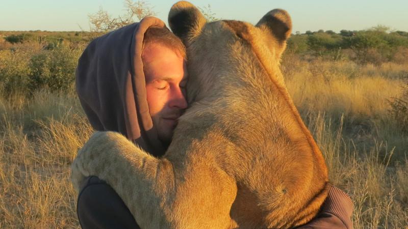 Große Mensch-Tier-Gefühle: Löwin Sirga bedankt sich mit Umarmungen bei ihrem Retter Valentin Grüner. (Quelle: Caters News)
