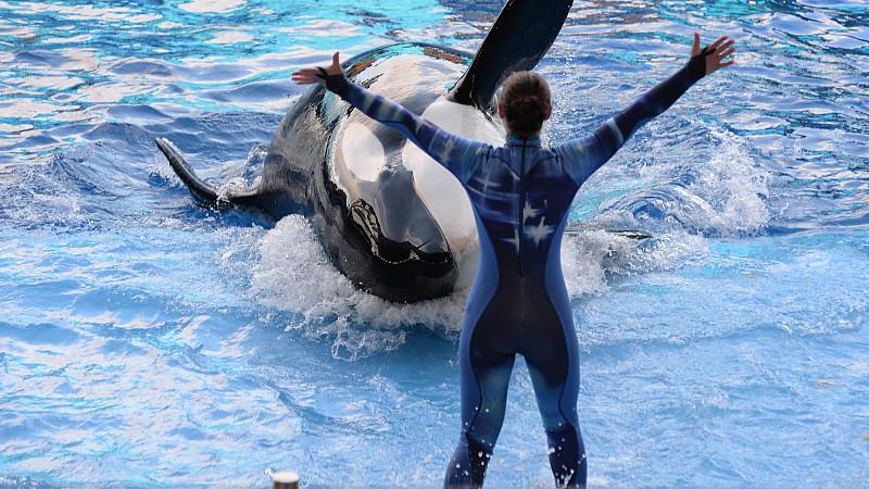 """SeaWorld Orlando beendet seine Orca-Show """"One Ocean""""."""