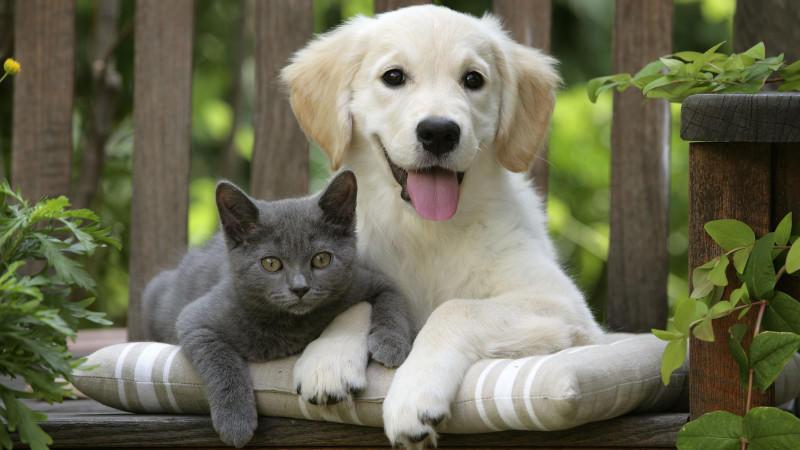Katze und Hund brauchen unterschiedlich viel Wasser am Tag.