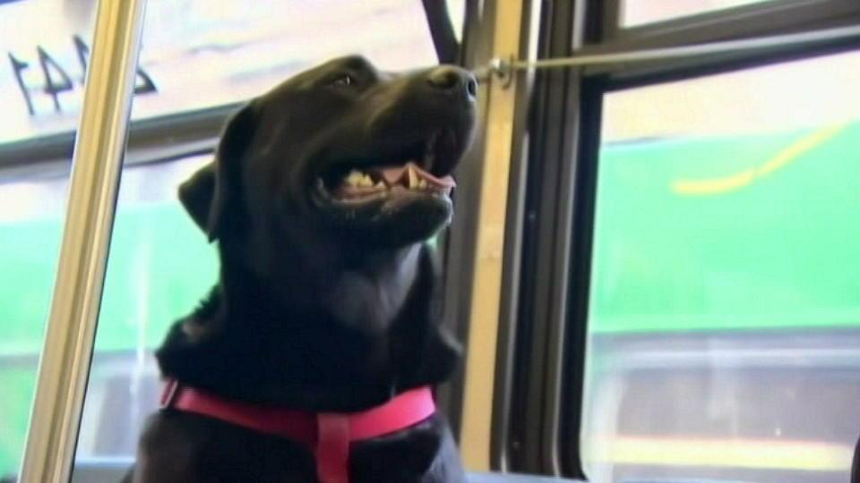 Eclipse fährt gern Bus - ohne Herrchen