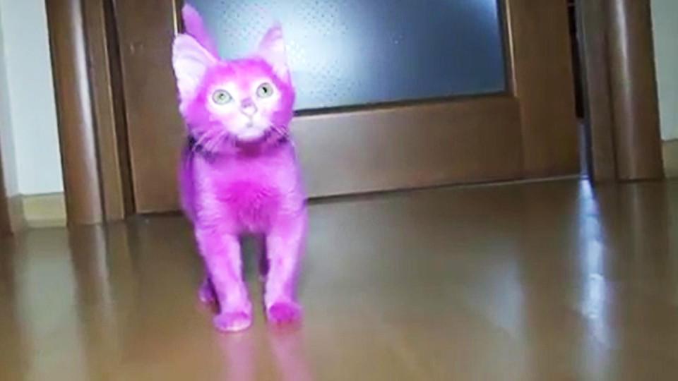 Die 'Pretty in Pink'-Party fand im September statt. Da war die Katze noch sehr klein.