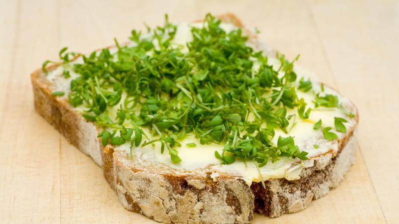 Kresse auf einem Brot mit Butter - mehr braucht es nicht.