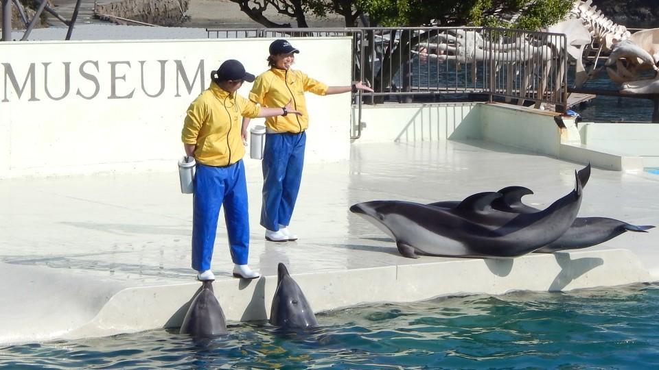 Delfine aus Taiji dürfen nicht mehr an japanische Zoos verkauft werden.