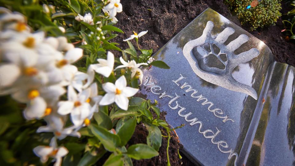 Friedhof für Mensch und Tier