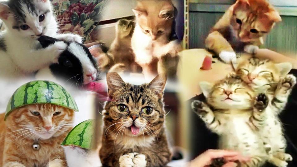 Jetzt wurde es bewiesen: Katzenvideos machen glücklich.