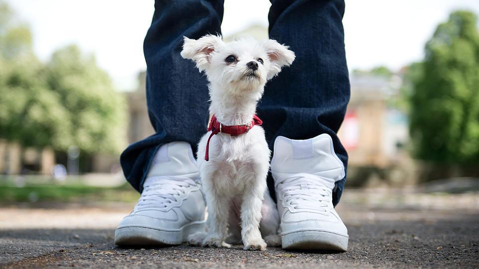 Aufgeheizter Asphalt kann für Hunde schmerzhaft sein.