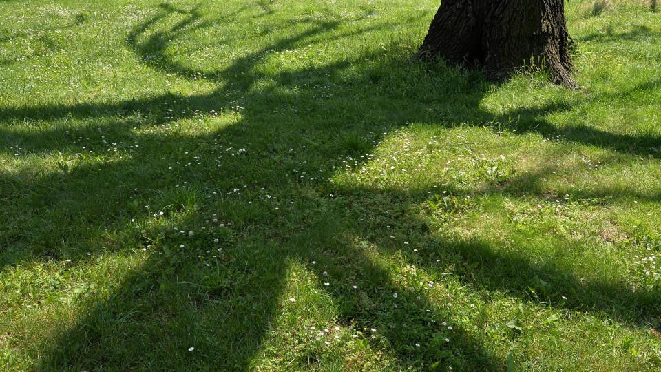 Schatten müsse geduldet werden - sofern er nicht unerträglich sei, so das Urteil des BGHs.
