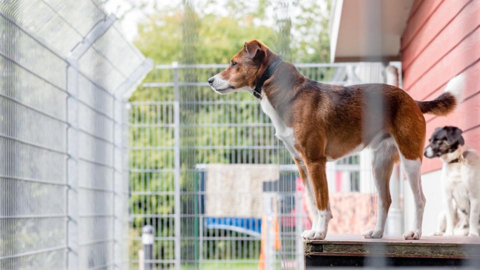 Größere oder verhaltensgestörte Hunde warten oft besonders lange auf einen neuen Besitzer.