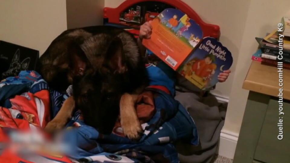 Tierische Nanny: Hund kümmert sich rührend um sein kleines Herrchen