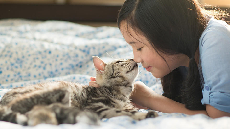 Haustiere im Bett: Katzen, Hunde und Co. sorgen für einen besseren Schlaf