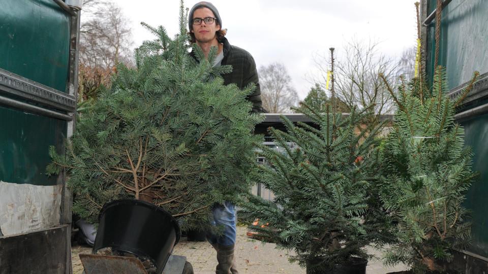 Tannenbaum Wegwerfen.Weihnachtsbaum Mieten Statt Wegwerfen So Funktioniert Das Prinzip