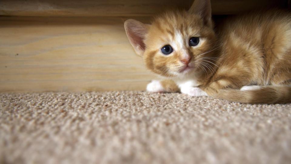 Der Silvesterkrach kann die sensiblen Haustiere ängstigen.