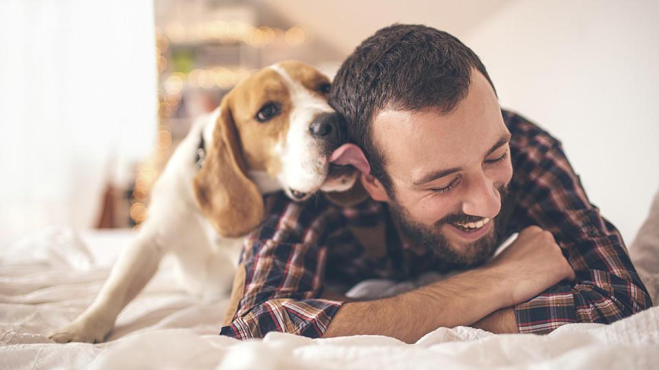Die Zunge des Hundes ist voller Bakterien.