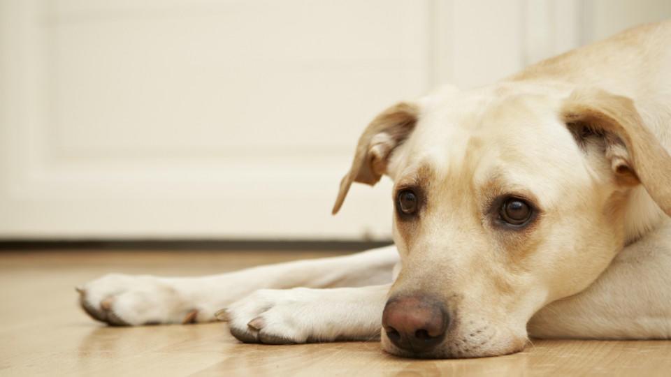Hund traurig.jpg
