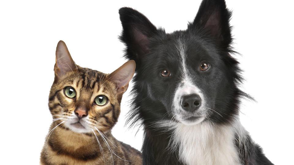 Versicherungen für Hunde und Katzen