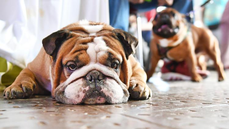 Ist Ihr Hund dabei? - Die klügsten & dümmsten Hunderassen