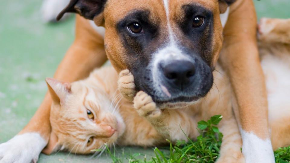 Katzen und Hunde können die kleinen Plastikfiguren verschlucken - und das kann zum Darmverschluss führen.