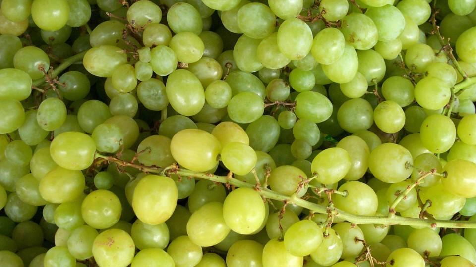 Weintrauben - Symbolbild.