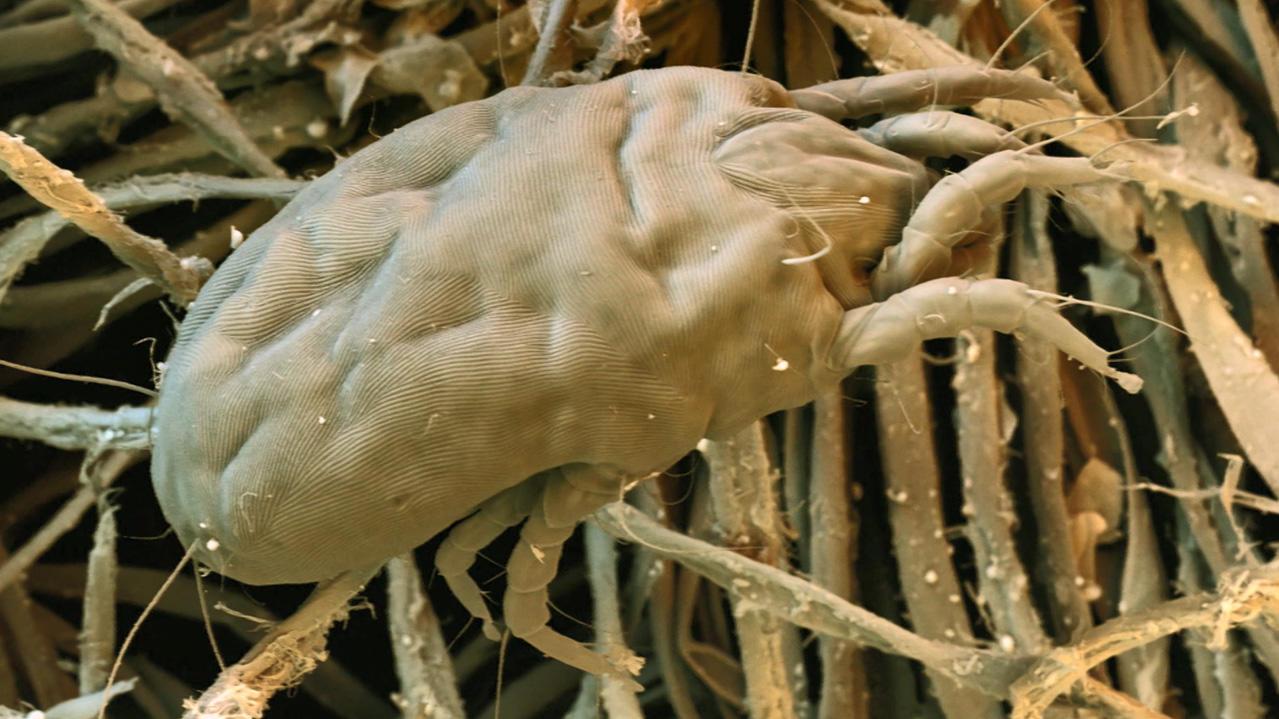 Nicht Nur Im Kuscheligen Heim Auch Hier Lauern Milben