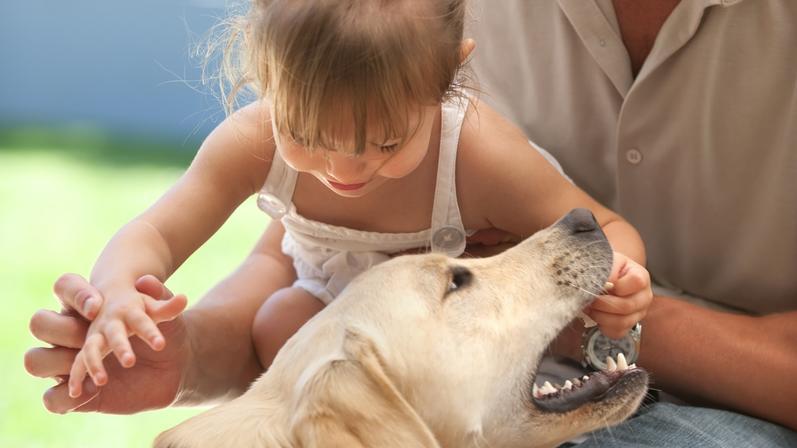 Symbol-Bild: Ein kleines Mädchen spielt mit einem Labrador.