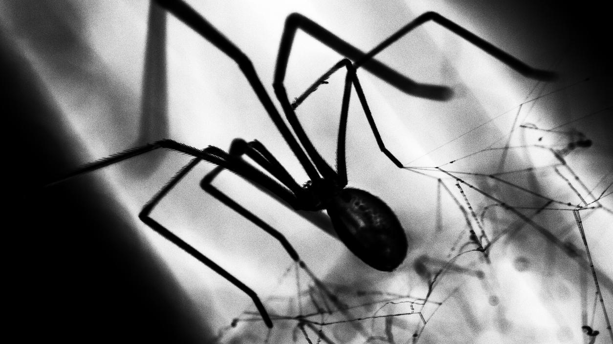 Spinne Vom Staubsauger Eingesaugt Lebt Sie Weiter Oder Nicht