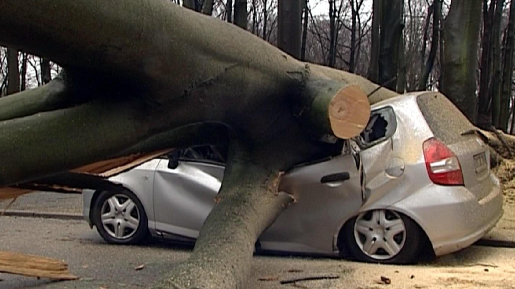 Immer wieder kommt es zu unglücklichen Unfällen, wo ein Baum auf ein Auto fällt. (Symbolbild)