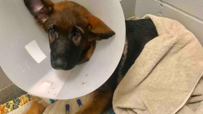 Mit diesem Foto rief der mutmaßliche Tierquäler zu Spenden für seinen Hund 'Atlas' auf.