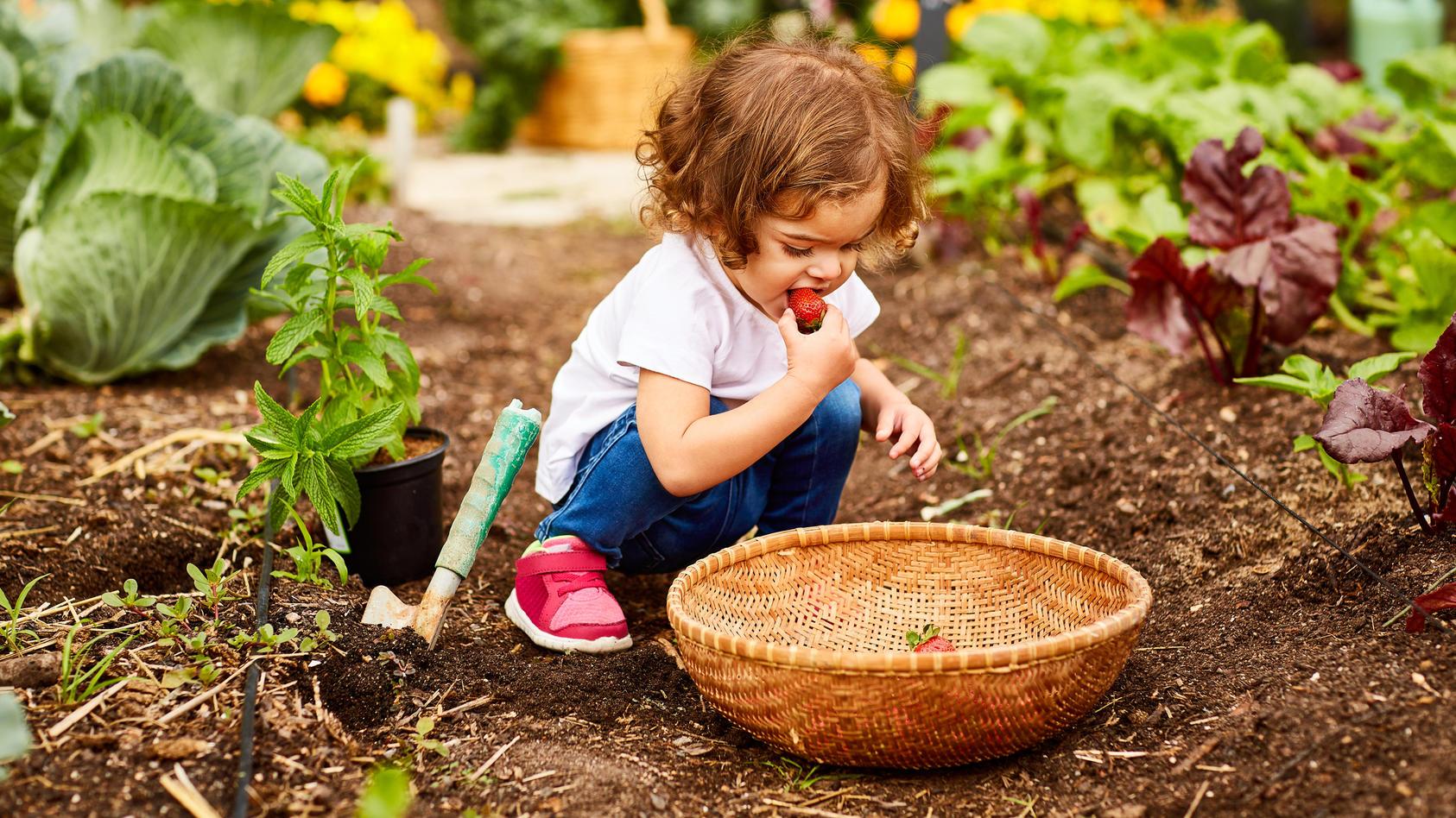 Fleischlose Ernährung bei Kindern kann Auswirkungen auf das Wachstum haben.