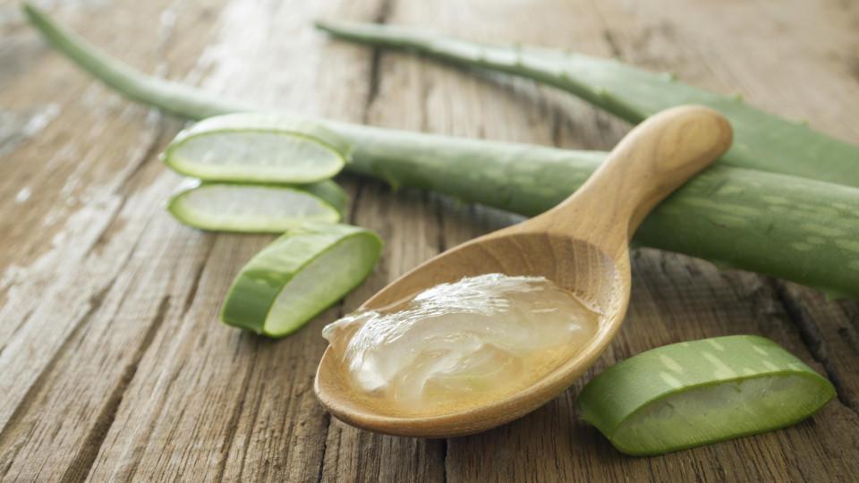 Gel der Aloe vera Pflanze hilft gegen den Juckreiz von Insektenstichen.
