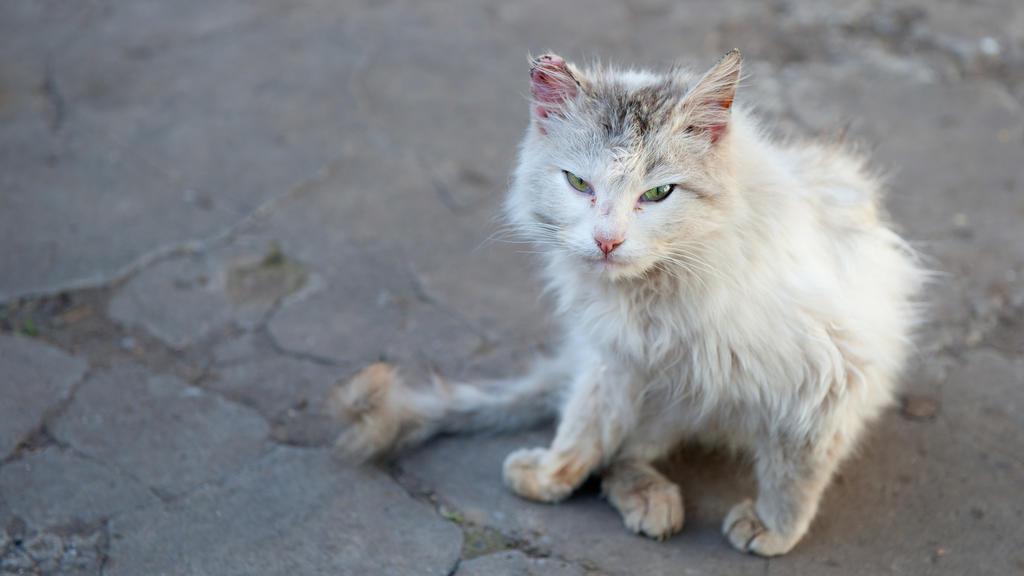 Verletzte Katze.