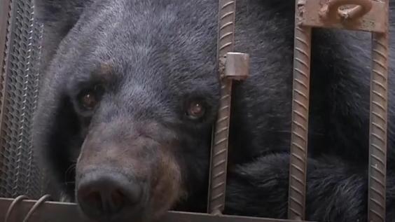 Heute lebt Little Black im 'Yunnan Wildlife Rescue Center'