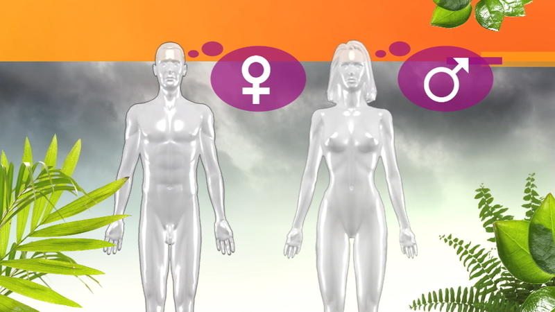 Transgender, Intersexualität, drittes Geschlecht oder