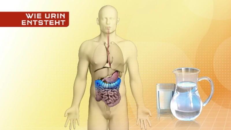 Blut und eiweiß im urin