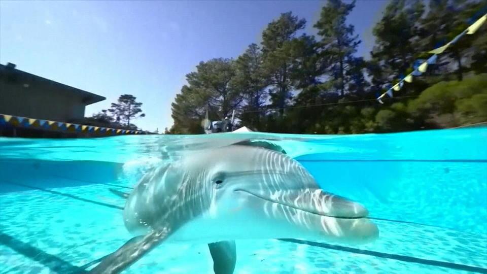 Roboter Delfin